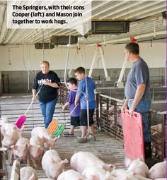 The Springers, with their sons Cooper (left) and Mason join together to work hogs.