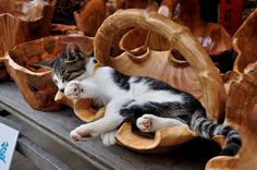 "cybergata: "" 篮子猫,哈哈 by meiweng_o on Flickr. "" Beautiful !!! \O/"