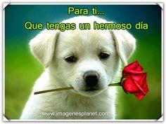 BUENOS DIAS con imagenes bonitas de perrito con rosas - Imagenes Romanticas para facebook | Imagenes de Amor