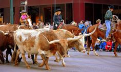Mille Fiori Favoriti: National Western Stock Show Parade in Denver