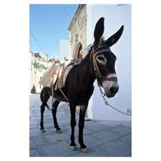 postcards from lindos of donkeys - Αναζήτηση Google