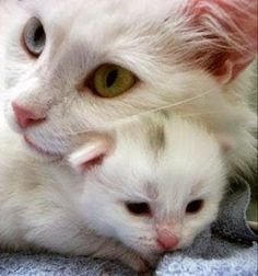Gatos! - Google+