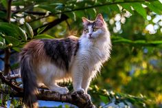 Photo Tree Cat by Andy Choinski on 500px