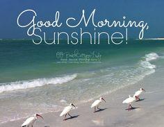 1282 Best Good Morning Sunshine Images Good Morning Bonjour Good