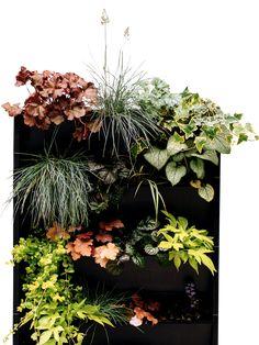Greek Garden, Vertical Garden Wall, Sun Loving Plants, Heuchera, Perfect Plants, Plant Needs, Water Systems, Plant Design, Plant Care