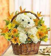 a-DOG-able - floral arrangements made into the shape of a dog with additional colored flowers around it!! How darn cute are these???| Dog Flowers | 1-800-FLOWERS.COM-11806