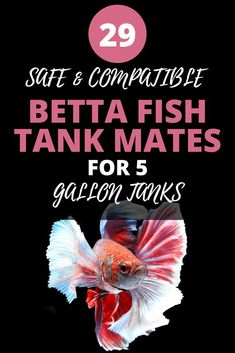 Betta Tank Mates: Huge List Of 29 Fish That Can Live With Betta Fish- In this article, you'll learn which fish species are compatible with either a male or female Bettas. You'll learn which fish we recommend because they are safe and will easil Betta Fish Tank Mates, Betta Fish Care, Betta Aquarium, Planted Aquarium, Fish Aquariums, Aquarium Design, Aquarium Ideas, Diy Aquarium, 10 Gallon Fish Tank
