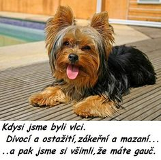 Haha, Jokes, Puppies, Humor, Funny, Carpe Diem, Animals, Facebook, People