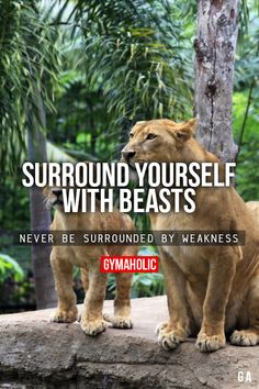 Surround Yourself With Beasts