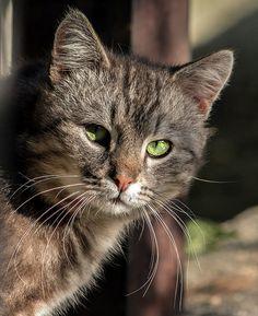 Cat ~ such beautiful green eyes