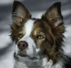 Amazing Professional Dog Portrait Photos, http://photovide.com/dog-portraits-2/