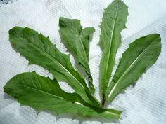 Voikukka-perunasalaatti Kotikokki.netin nimimerkki Muarin tapaan Plant Leaves, Planters, Eat, Cooking, Garden, Food, Vegetable Garden, Kitchen, Garten