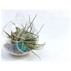 D e c e m b e r   The birthstone for December and Sagittarius is Turquoise said to protect heal and strengthen friendships. This month's crystal air plant terrarium available now in the shop  link in bio