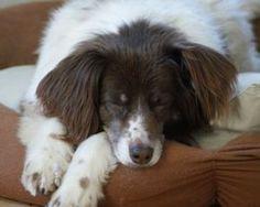 Dog TV bringt Fernsehprogramm für Hunde.
