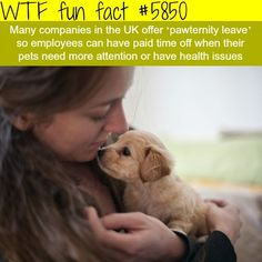 Pawternity Leave - WTF fun facts