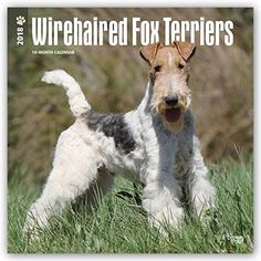 Wirehaired Fox Terriers 2018 12 x 12 Inch Monthly Square Wall Calendar, Animals Dog Breeds Terriers (Multilingual Edition) Wirehaired Fox Terrier, Fox Terriers, Wire Fox Terrier, Dog Lover Gifts, Dog Lovers, Dog Christmas Gifts, Pet Dogs, Pets, Brown Trout