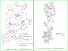 Wildflower Coloring Books -Idaho
