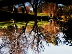 The beauty of reflection