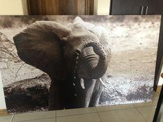 #Baby Elephant