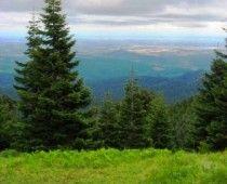 Mary's Peak near Corvallis, Oregon. Tallest mountain in Coastal Range in Oregon. Saw Hale-Bopp comet from here. Beautiful.