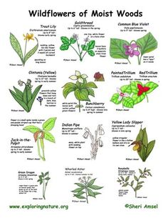 poisonous plant identification guide pdf