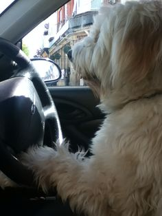 When Harvey learnt to drive ..,