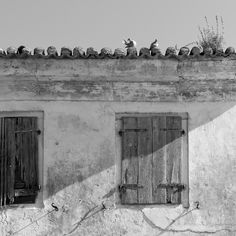Two Pigeons by Tom S. Johansen (An image from the old town in Parga, Greece. Photography Journal, Fine Art Photography, Photography Tips, Tom S, Pigeon, Terra, Old Town, Black And White Photography, Old Things