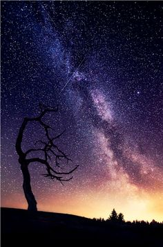 Starry night and tree