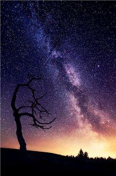 Starry night and tree