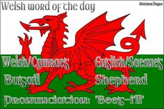 Welsh word of the day: Bugail/Sheperd