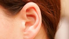 De onderdelen van het oor (knutsel/Engelstalig)