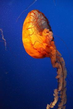 Aquarium in Vancouver Lovely Creatures, Sea Creatures, Pretty Animals, Ocean Life, Jellyfish, Marine Life, Under The Sea, Underwater, Corals