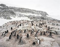 Hans-Christian Schink, Antarctica 9, 2010, C-Print/Diasec, 178 x 215 cm und 121 x 145 cm, Auflage 5 + 3