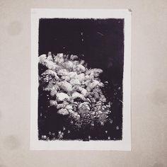 New monotype!  #estampe #blackandwhite #monotype #abstract #printmaking (à Paris, France)