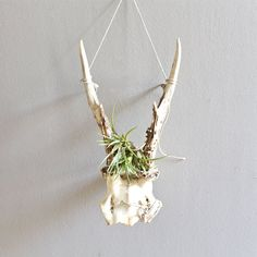 Vintage Deer Antlers by lovintagefinds on Etsy, $49.00