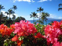 Aloha from Maui! by thfr, via Flickr