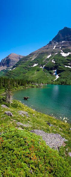Moose  Bullhead Lake, Glacier National Park