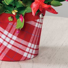 Always enormously popular, this cactus provides red and white blooms that look as sweet as candy! Christmas Cactus, Avocado Egg, Candy Cane, Red And White, Bloom, Gift Wrapping, Sweet, Gifts, Gift Wrapping Paper