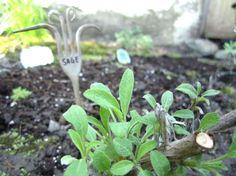 12. Fork Garden Labels