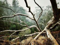 arbre-foret