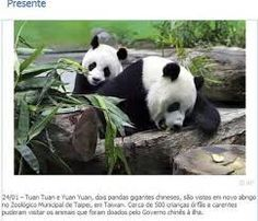 imagens lindas de animais - Pesquisa Google