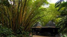 """@no_rumo do Jardim Botânico da Amazônia, em Belém do Pará, apresentado no texto """"Florestas Urbanas"""", de Valéria del Cueto, para o Sem Fim..."""