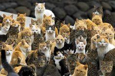 Kissat oleskelivat satamassa Aoshiman saarella Japanin eteläosassa viime keskiviikkona. Saari on täynnä kissoja, jotka ovat vallanneet vanhan kalastajakylän hylättyjä taloja.