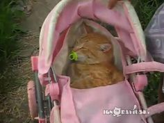 Tagged with Aww; Little girl puts cat in stroller and gives her a pacifier. Cat loves it. I Love Cats, Cool Cats, Cat Aesthetic, Mood Pics, Cats And Kittens, Funny Cats, Cute Animals, Creatures, Cat Stroller