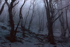 Photography Winter Forest Dark Ideas Source by tubbytaku Source by tubbytaku … Winter Forest, Dark Forest, Misty Forest, Magical Forest, Photography Winter, Pinterest Photography, Forest Photography, Nature Photography, Maleficarum