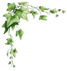 borders with ivy Vine Border, Leaf Border, Vine Drawing, Image 3d, Ivy Plants, Borders And Frames, Flower Frame, Botanical Art, Fabric Painting