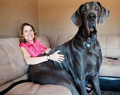 1000+ images about Animals on Pinterest | Big dogs, Lap dogs and ...