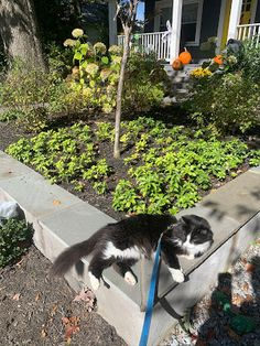 390 Cats In Gardens Ideas In 2021 Cats Gardening Blog Animals