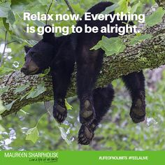 Relax now everything is going to be alright. #lifeofnolimits #feelalive #lifecoach #mentor #mindset #nlp #personaldevelopment #beyou #behappy #bestself #bestlife #achievegoals #success