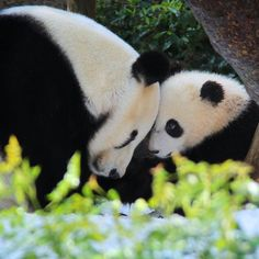 Mother & son @ San Diego Zoo by Penny Hyde